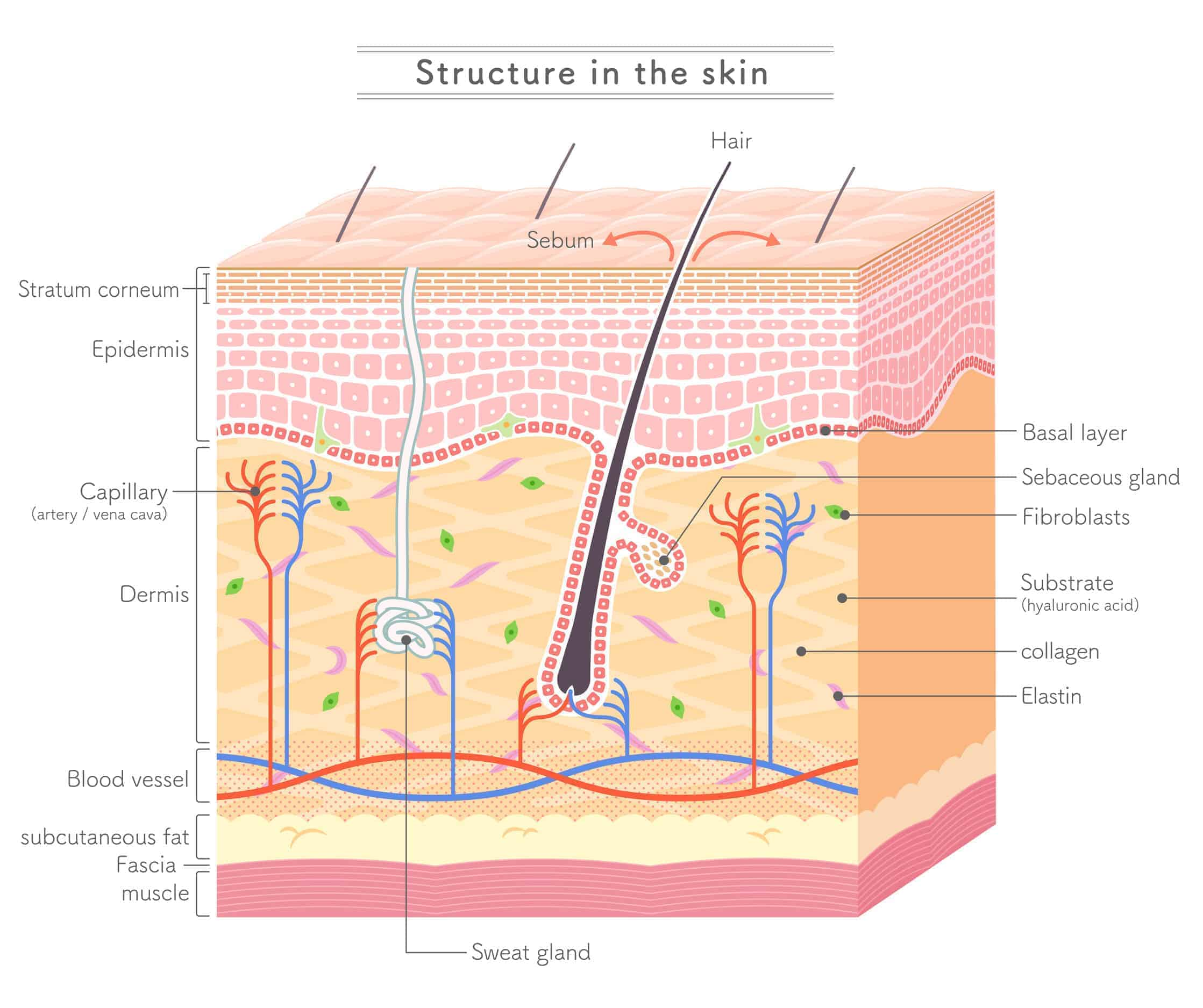 Structure in the skin